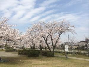 水郷公園2