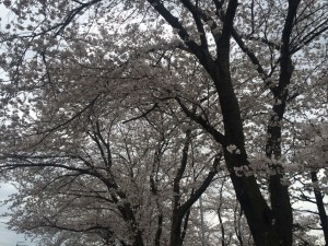 水郷公園3