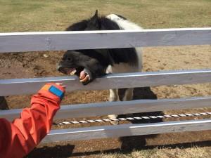 馬にエサやり